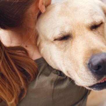 adestrador de cachorrov
